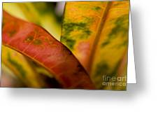 Tropical Leaf Abstract Greeting Card