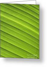 Tropical Leaf Patterns Greeting Card