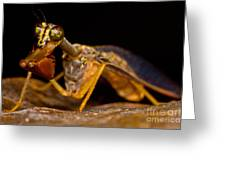 Tropical Mantispid Greeting Card