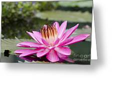 Tropical Night Flowering Water Lily Rose De Noche II Greeting Card