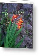 Tropical Orange Lily Greeting Card