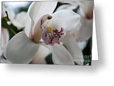 Tropical Orchid Greeting Card