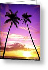Tropical Palm Trees Silhouette Sunset Or Sunrise Greeting Card