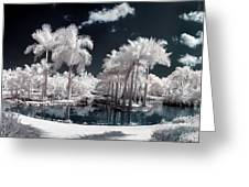 Tropical Paradise Infrared Greeting Card