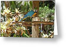 Tropical Parrot Greeting Card