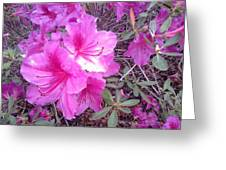 Tropical Pink Flowers Greeting Card