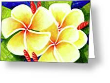 Tropical Plumeria Flowers #226 Greeting Card