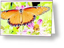 Tropical Queen Butterfly, Soldier Butterfly Greeting Card