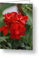 Tropical Red Canna Lilly Greeting Card