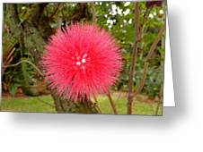 Tropical Red Puff Greeting Card