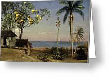 Tropical Scene Greeting Card