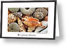 Tropical Shells... Greeting Card Greeting Card by Kaye Menner