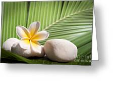 Tropical Still Life Greeting Card
