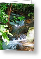 Tropical Stream Greeting Card