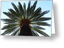 Tropical Summer Palm Tree Greeting Card