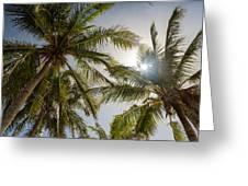 Tropical Sun Greeting Card