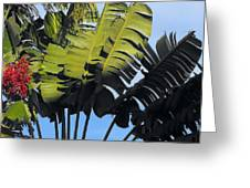 Tropical Sunlight And Shadow Greeting Card
