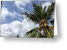 Tropical Treat Greeting Card