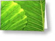Tropical Vibrant Green Greeting Card