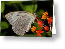 Tropical White Butterfly Greeting Card by April Wietrecki Green