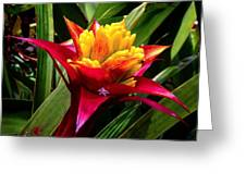 Tropicals Greeting Card