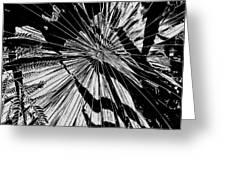 Tropix Noir Greeting Card