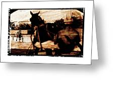 trotting 1 - Harness racing in a vintage post processing Greeting Card