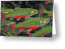 Trout Art Brook Trout Fish Artwork Giclee Wildlife Underwater Greeting Card