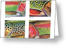 Trout Colors Greeting Card