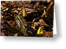 Trout Lily I Greeting Card