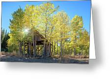 Truckee Shack Near Sunset During Early Autumn With Yellow And Green Leaves On The Trees Greeting Card