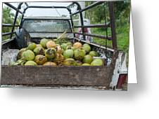 Truckload Of Coconuts Greeting Card