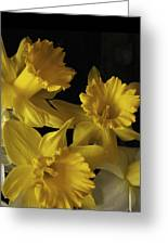 Trumpet Daffodils Greeting Card