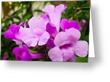 Trumpet Flower 10 Greeting Card