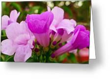 Trumpet Flower 5 Greeting Card