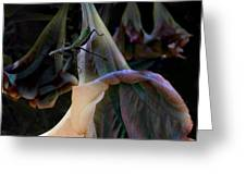 Trumpet Flower Greeting Card by Rob Outwater