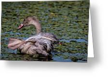 Trumpeter Swan Foot Wave Greeting Card