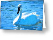 Trumpeter Swan Impressions Greeting Card