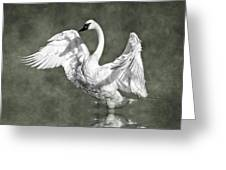 Trumpeter Swan In The Fog Greeting Card