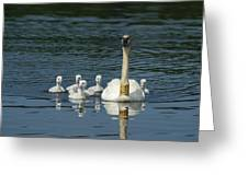 Trumpeter Swan With Cygnets Greeting Card