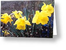 Trumpets Of Spring Greeting Card