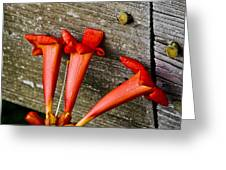 Trumpets On The Fence Greeting Card