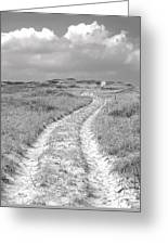 Truro Dune Trail Greeting Card