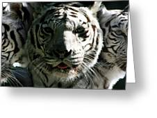 Tryptic Tiger Greeting Card