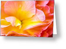 Tuberous Begonia  Greeting Card