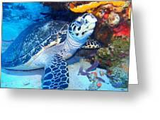 Tucked Away Turtle Greeting Card