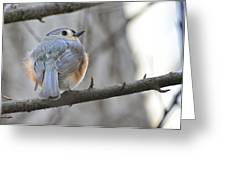 Tufted Titmouse 01 Greeting Card