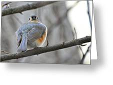 Tufted Titmouse 02 Greeting Card