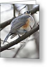 Tufted Titmouse 04 Greeting Card