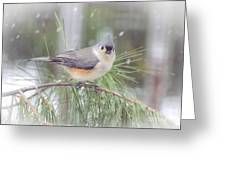 Tufted Titmouse - A Winter Delight Greeting Card